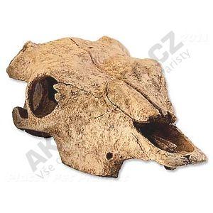 Exo Terra bůvolí lebka